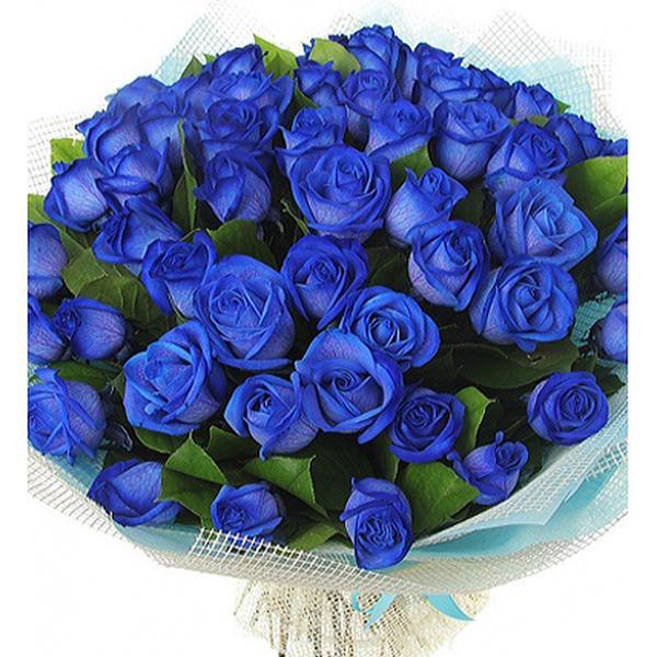 Февраля живых, красивые букеты синих роз картинки