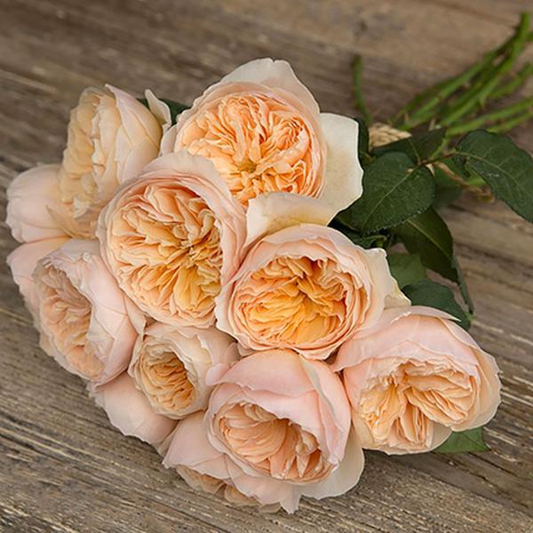 Доставкой запорожье, букет английских роз купить спб